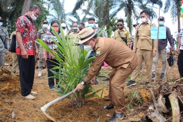 Wakil Bupati Lakukan Tanam Perdana Program PSR di Desa Harapan Makmur.
