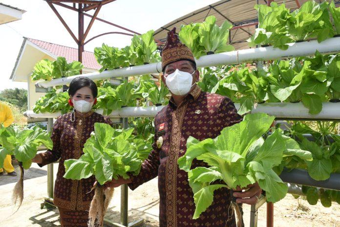 Bupati diampingi istri memanen sayur dan jagung di kebun Hatinya PKK yang berlokasi di Antong Ngelayan.