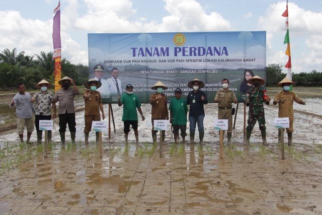 Wakil Bupati Sanggau bersama Kepala BPTP Kalbar saat melakukan penanaman perdana varietas padi unggul.