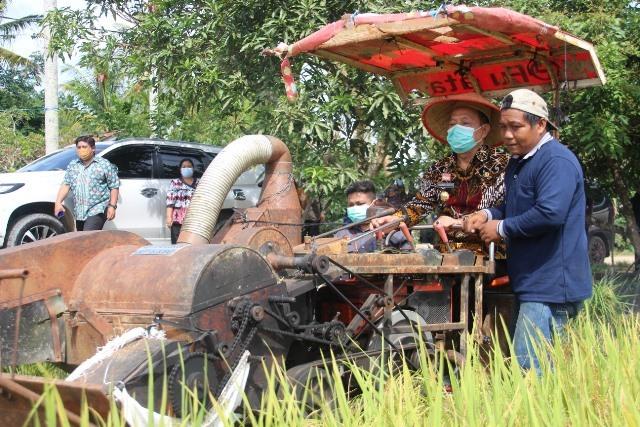 Wakil Bupati beserta sejumlah pejabat lainnya melakukan panen padi perdana varietas inpari 37 di Desa Tunggal Bhakti.